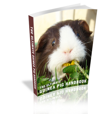 Product picture The Ultimate Guinea Pig Handbook